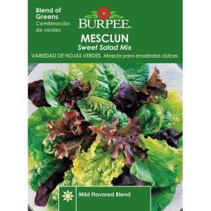 Burpee Mesclun Sweet Salad Mix Seed 65846