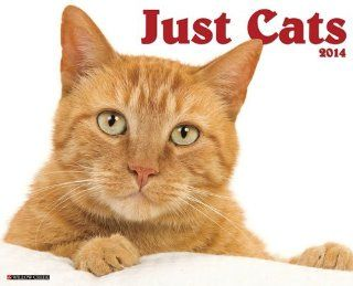 Cats   2014 16 Month Calendar   Wall Calendars