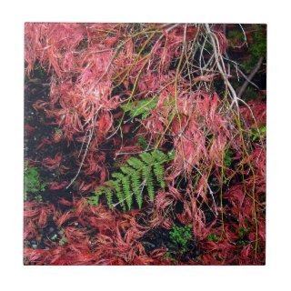 Japanese Maples Leaves carpet the soil Ceramic Tiles