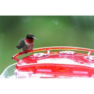 Aspects 407 Jewel Box Window Hummingbird Feeder, 8 Ounce  Wild Bird Feeders  Patio, Lawn & Garden