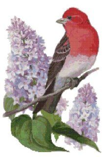 New Hampshire State Bird and Flower Purple Finch and Purple Lilac Counted Cross Stitch Pattern: Arts, Crafts & Sewing