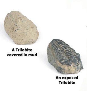 Fossil Find Trilobite Craft Kit (makes 25 projects): Toys & Games