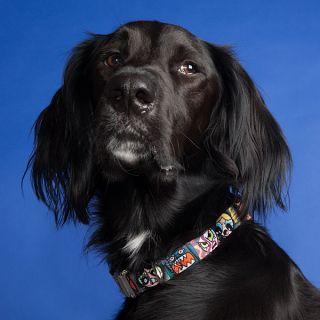 Powerpuff Girls Dog Collar
