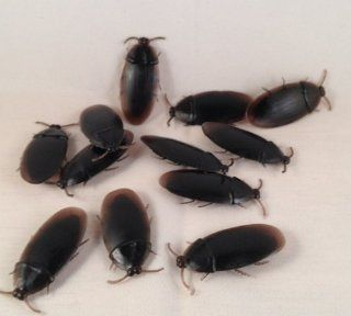 12  Fake Roaches Prank Novelty Cockroach Bugs Look Real: Toys & Games