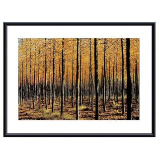 Barewalls Trees by John K. Nakata Framed Photographic Print