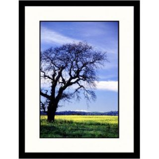 Great American Picture Landscapes 'Old Oak Tree, California' by Tom Carroll Framed Photographic Print