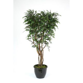 Distinctive Designs T 146 7 G1BK 7 Ruscus Smilax Tree in Black Glazed Rimmed Ceramic Planter