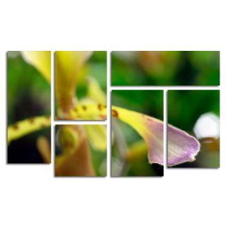 Trademark Fine Art To Touch an Orchid by Kurt Shaffer 6 Piece Canvas
